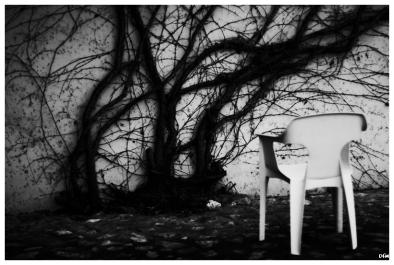 Cadira i planta enfiladissa