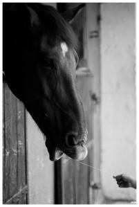 Ma i cavall