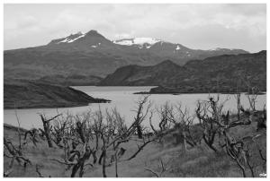 Passejant pel parc del Paine