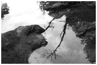 Arbres al riu