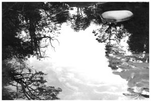 Bosc reflexat