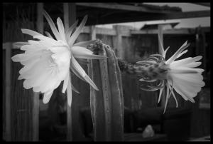 Flors d'un dia